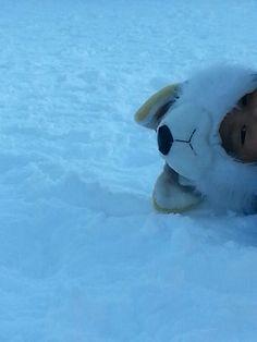 Petit loup des neiges