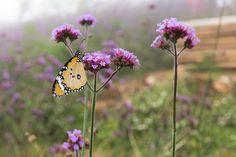 Help Local Pollinators Survive the Winter #pollinators