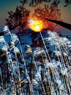 """Pontchartrain"" © 2012 Skip Hunt Fine art prints starting at $232 + http://www.kaleidoscopeofcolor.com/galleria/lithofusion/"