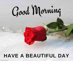 Looking for Beautiful Good Morning Images? Check out our collection of Beautiful HD Images, Photos, Pics, Wishes and Greetings to send on Whatsapp for Free. Good Morning Couple, Beautiful Morning Quotes, Good Morning Beautiful Flowers, Good Morning Beautiful Pictures, Good Morning Love Messages, Good Morning Roses, Good Morning Images Hd, Morning Thoughts, Good Morning Picture