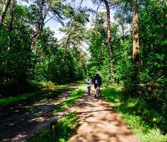 Fietsroute 395484: De prachtige omgeving van Wou... Utrecht, Country Roads