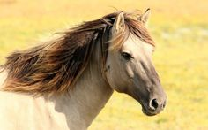The Act to Ban the Slaughter of American Horses Has Been Reintroduced! You Can Support it Now U.S. Senators from New Jersey, South Carolina, Rhode Island, and Maine are bringing forth a Senate version of the SAFE Act, which would ban the slaughter of horses on American land and prohibit the…