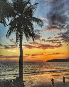Such beautiful sunsets!  i need vitamin SEA!!! #goa #beach @goa #sunset #sundown #palm #cloud #sky #nature #love #travel #wanderlust #travelgram #vacation #throwback #goodtimes #bliss by swadhajais