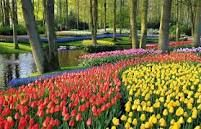 spring in holland - Google Search