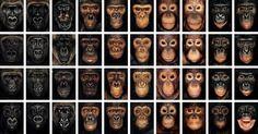 hominidos - Buscar con Google