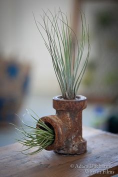 Air Plant Pipe