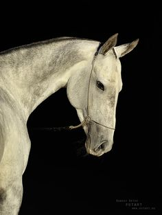 Akhalteke horse by Artur Baboev on Most Beautiful Animals, Beautiful Creatures, Akhal Teke Horses, Magnificent Beasts, Types Of Horses, Horse Gear, All About Horses, Horse Breeds, Thoroughbred