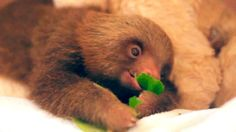 """""""Chompin' is all I need."""" 