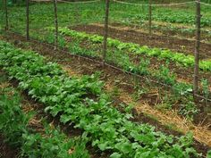 3 biotrágya a kertbe My Secret Garden, Growing Plants, Permaculture, Vegetable Garden, Homesteading, Vineyard, Landscape, Vegetables, Green
