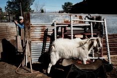 Alex Webb USA. Sunland Park, New Mexico. 2004. Esteban SALDANA, longtime landowner and farmer.