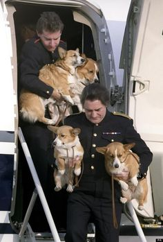 Queen's Corgis traveling in style!