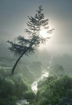 A Beautiful Over Misty Day