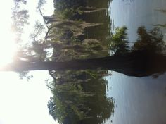 Belle River, Louisiana (grave yard island)