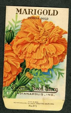EVERITT'S SEED STORE,  Marigold 971, Vintage Seed Packet