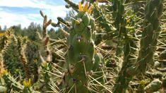 Fruit, Plants, Photography, The Fruit, Flora, Plant, Photograph, Fotografie, Planting