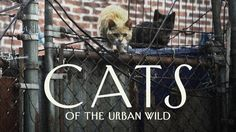 Tens of thousands of feral and stray cats roam the streets of New York. How we should deal with the overpopulation has been contentiously debated for decades.  Read more: http://nyr.kr/1LhC8wk Subscribe: vimeo.com/newyorker Follow us: twitter.com/newyorkervideo Watch more videos at newyorker.com/video