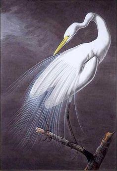 Audubon bird art