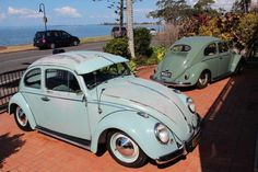 61 beetle and friend