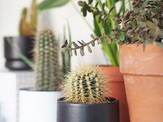 Kotilo - Divaaniblogit Plants, Plant, Planets