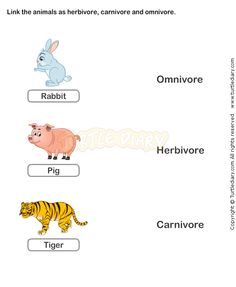 Free 2nd Grade Science Worksheets | Food Chain Worksheets | Free ...