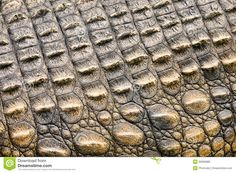 african texture - Yahoo Image Search Results
