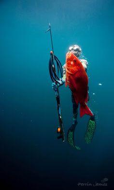 spearfishing - Google Search