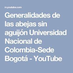 Generalidades de las abejas sin aguijón Universidad Nacional de Colombia-Sede Bogotá - YouTube