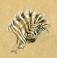 Brown Paper Zebra Sketch by Hbruton