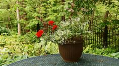 Our Top 10 Container Gardening Tips