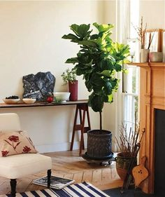 5 Favorites: House Plants To Simplify Your Life Gardenista