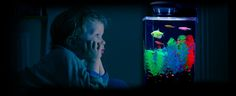 GloFish. Gussie wants an aquarium with some of these genetically modified glowing fishies.