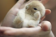 Look at this cute bunny, it fits in your palm, D'awww!