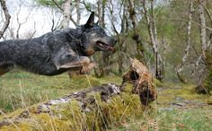 The chase ... by Mr_Grim, via Flickr