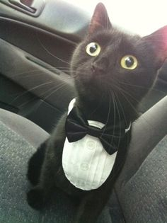 Look at the cat! he looks so cute and dolled up!