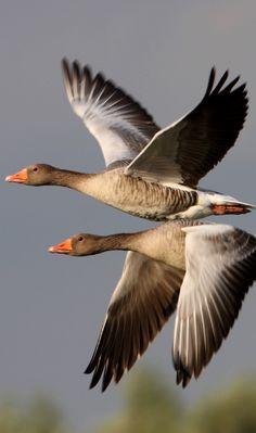 Nestled away in the Warta River Estuary National Park lies Poland's Republic of Birds.  ~ Warta Mouth, Poland