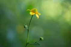Toward the sunlight by Masaru Kuroda on 500px