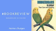 Budgerigars in Colour Animals And Pets, Baby Animals, Funny Animals, Cute Animals, Wild Animals, Budgies, Baby Dogs, Dinosaur Stuffed Animal, Colour