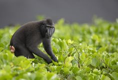 Mother Nature, Panther, Monkey, Around The Worlds, Island, Animals, Mountains, Landscape, Jumpsuit
