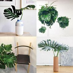 New Plant on the Block - Monstera (aka: split leaf philodendron). Or the xanadu philodendron