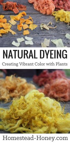 Vibrant colors can be achieved with the process of natural dyeing. Use plants from your backyard to create dyes for cotton, silk, wool and more! | Homestead Honey