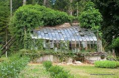 [CasaGiardino]  ♡  Abandoned greenhouse reclaimed by nature...nothing goes to waste.  (Not my work...... Spotted in France, just had to snap it...from Evan Deuce Design)