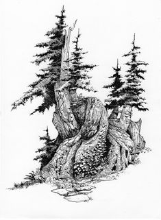 how to draw stitch Tree Drawings Pencil, Ink Pen Drawings, Realistic Drawings, Landscape Drawings, Landscape Art, Ink Illustrations, Illustration Art, Tree Sketches, Coloring Book Art