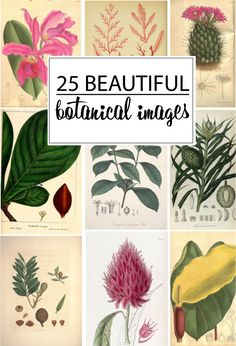 25 Beautiful Botanical Images (use to make wrapping paper, wall art, printable wallpaper, decoupaging, etc.) Cute!