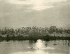 peter henry emerson Marsh Leaves
