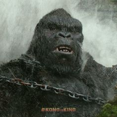 Man is King. Until they meet Kong. Join Tom Hiddleston Brie Larson John Goodman Samuel L. Jackson and John C. Reilly as they journey to Skull Island. See now playing in theaters everywhere Get Tickets! Kong Skull Island Movies, King Kong Skull Island, King Kong Vs Godzilla, Godzilla Vs, New Movies, Good Movies, Godzilla Video, Thomas William Hiddleston, Tom Hiddleston King Kong