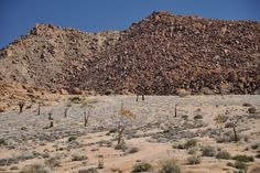 Trip to Richtersveld desert in South Africa by Geology and pictures of landscape. Travel Tours, Tour Guide, Geology, South Africa, City Photo, Succulents, Deserts, Scenery, Rocks