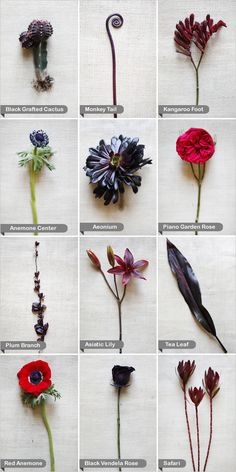 red and black wedding flowers are kind of edgy and cool