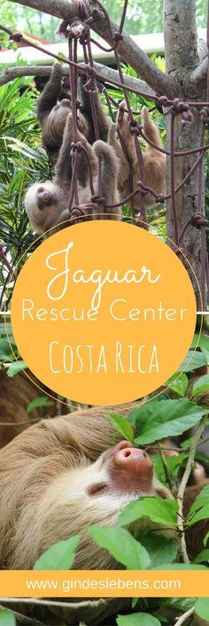 Wildtier-Auffangstation Jaguar Rescue Center Ebenfalls an der Karibikküste Costa Ricas befindet sich die Wildtier-Auffangstation Jaguar Rescue Center. Anders als beim Sloth Sanctuary, das sich ja auf Faultiere spezialisiert hat, werden hier unterschiedlich Wildtiere aufgenommen. Das Ziel ist diese wieder auszuwildern.