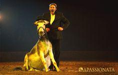 """APASSIONATA Tour 2012/2013 - Mit viel Witz und Charme bringen Esel """"Basile"""" und Laurent Jahan das Publikum zum Lachen."""