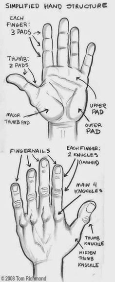 The Structure Of Hand Study | Realistic Hyper Art, Pencil Art, 3D Art, Sketches, & All Kind's Of Art